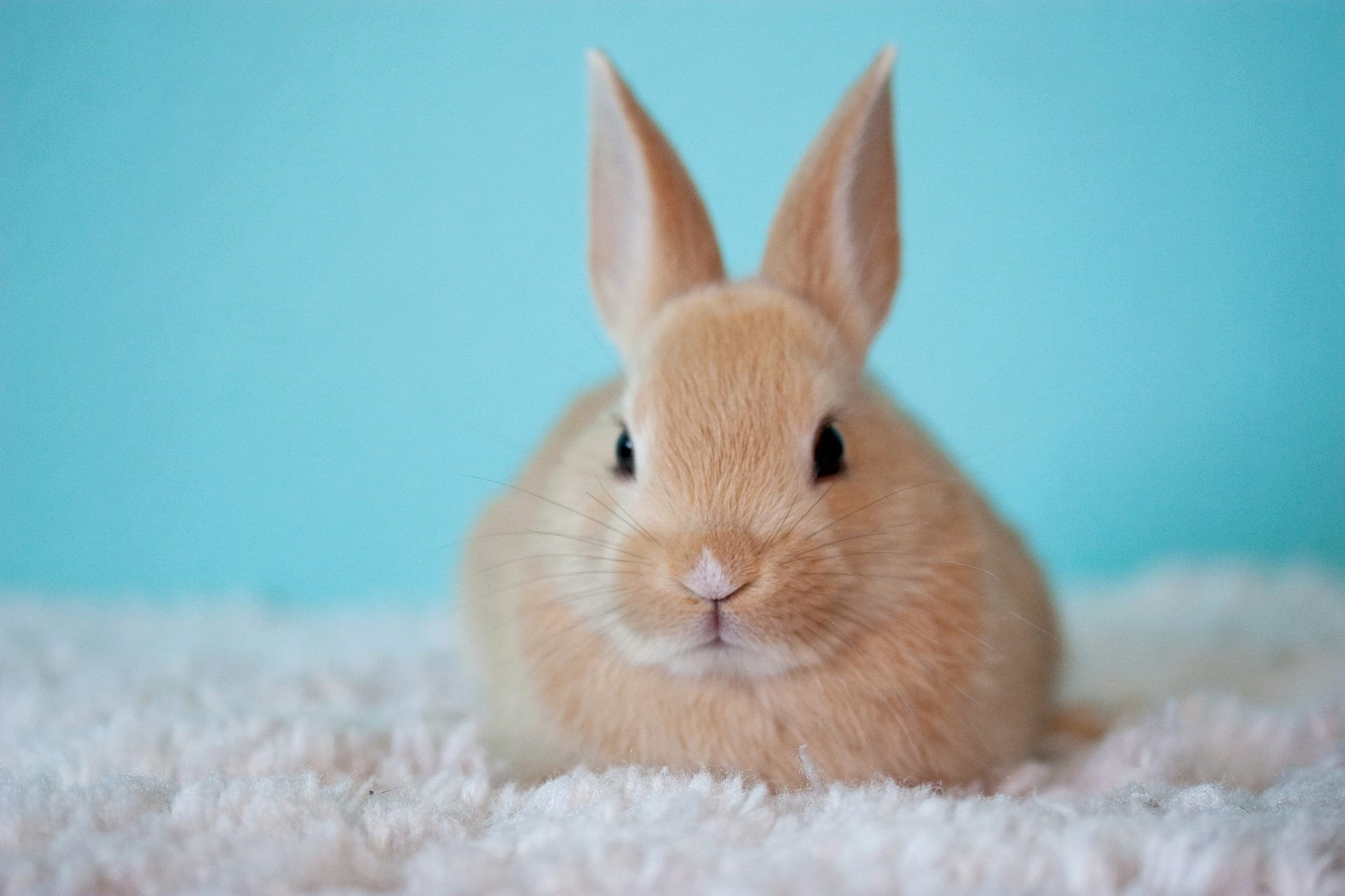 California's Cruelty-Free Cosmetics Act Gains Approval from State's Democratic Party