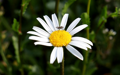 The Health and Safety of Avoiding Insect Bites